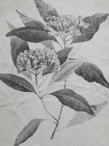 FLEURS Plante LITHOGRAPHIE Botanique Gravure XIX°