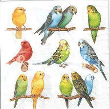 4 single paper decoupage napkins. Parrots, birds, colorful parrots - 459