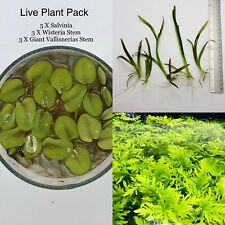 Live Aquatic Plant Variety Pack. Salvinia + Wisteria + Giant Vallisneria
