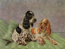 COCKER SPANIEL CHARMING DOG GREETINGS NOTE CARD TWO ROAN DOGS SIT ON CUSHION