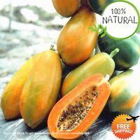 Papaya Bonsai Organic Seeds Plants Heirloom Vegetable Fruit Tree 20pcs/bag