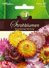 5471070 Strohblume Riesenblumige Mischung  Trockenblume   Blumen Samen