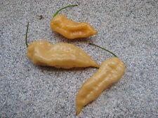 Fatalii Peach 5 Samen **RARITÄT** Fatali Chili Chilisamen