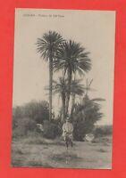 Marokko - Oujda - Palmen von Sidi yaya (B8952)