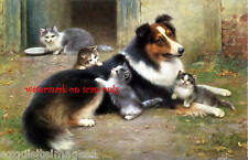 Antique Art~W.Schwar~Collie Dog with Kittens~ NEW Large Note Cards