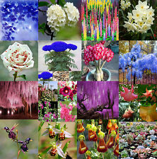 Rare Variety Mixed Flower Rainbow Colorful Beauty Plant Seeds Home Garden Decor
