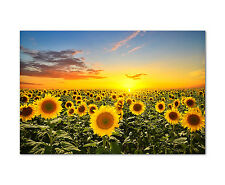 120x80cm Wandbild auf Leinwand Sonnenblumenfeld Sunflowers gelb Sinus Art