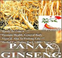 100 Pcs Seeds Ginseng Panax Ginseng Potted Bonsai Flowers Plants Home Garden NEW