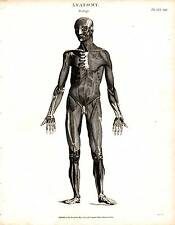 1804 DATED PRINT ANATOMY ~ MYOLOGY ~ MUSCLES MALE FIGURE BONE