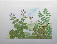 Naturalist Vogel und Schmetterling am Fluss Illustration Mischtechnik signiert