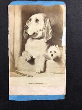 "Victorian Carte De Visite CDV: Album Filler Card: Dogs: ""Dignity & Impudence"""