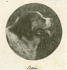 Portrait du chien Boris  Vintage silver print.  Tirage argentique mat  8x8