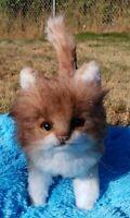 Realistic Handmade Kitten by Vitaliya Kozhevnikova Artist Cat Bear OOAK