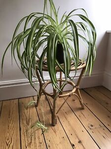 Vintage Bamboo Cane Table Plant Stand Size H38 W39 cm