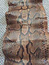 More details for old python skin. about 11 feet long.