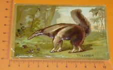 CHROMO BON-POINT IMAGE ECOLE Gaufré 1890-1910 ANIMAUX TAMANOIR