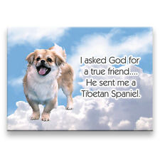 Tibetan Spaniel True Friend From God Fridge Magnet Dog