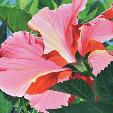 DANFORTH Sun Drenched Hibiscus 8x8 archival giclee paper print of painting
