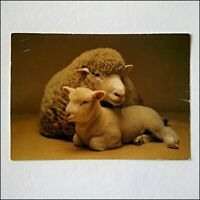 British Sheep Breeds Dorset Poll Ewe with Lamb Postcard (P409)