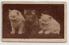 Rare Original UK Trade Card Edmondson Art Picture Series - 3 cats kittens