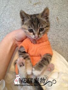 XXXXS/XXXS/XXS Teacup Dog Sweater Puppy Cat Hoodie Clothes for chihuahua yorkie