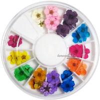 12 Color Real Dry Dried Flower for 3D UV Gel Acrylic False Tips Nail Art Salon