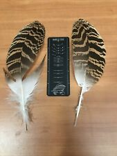 Big pair beautiful Florican bustard feather Classic Salmon Fly Tying Material 1