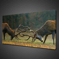 FIGHTING BUCKS STAG DEER ANIMAL MOUNTED CANVAS PRINT WALL ART PICTURE PHOTO