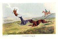 COURSING THE HARE, GREYHOUNDS PICKING UP RABBIT, HORSE WHIP, GREYHOUND DOG HUNT