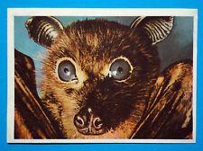 Figurina Panini-ANIMALI DI TUTTO IL MONDO 1965-n.55-ROSSETTA-rec