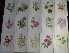 15 Affiches Botanique herbier Jardin  chèvrefeuilles, Kiwi, Glycine,cognassi