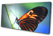 Butterfly Nature  Animals SINGLE DOEK WALL ART foto afdrukken
