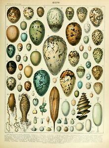 Vintage Eggs Chart Print , Birds Egg Print Quality Print A5 to A1