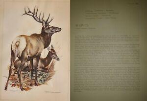 """Vintage-Lithographie von ca 1956 """"Säugetiere"""" Tafeln Kronen-Verlag Erich Cramer"""