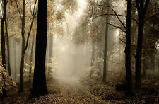 Framed Print - Track/Path Through an Autumn Forest (Picture Poster Woods Trees)