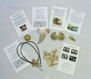 Fossil Gift Box Educational Lot Shark Tooth Dinosaur Mosasaur,Otodus Necklace #3
