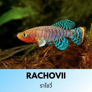 RACHOVII Killi Fish Eggs Breeding Full Equipment Boxset 4 Beginner Toy Magic Kid