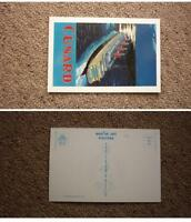 OLD SHIP SHIPPING POSTCARD, CUNARD LINE STEAM SHIP Co