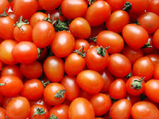Tomato Seeds 30 Seeds Red Small Variety Lycopersicon Esculentum Seeds B040 Hot
