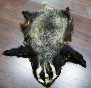 REAL EUROPEAN BADGER Fur Pelt Skin Taxidermy Hunting Tanned Log Cabin Decor