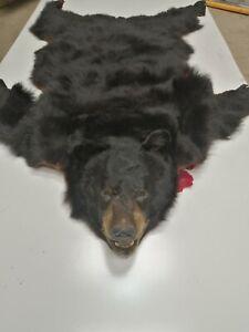 GENUINE! Large! Vtg Antique BLACK Bear real Skin  Not-Sheep-Not-Faux! 1.50 cm L