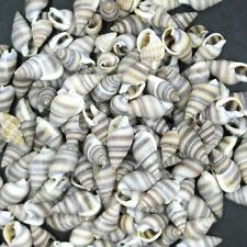 100pcs small Beautiful top rare real sea Shell Conch EQ0150