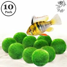 Luffy 10 Marimo Moss Balls : Aquarium Decor, Fishes, Shrimps & Snails Love Them