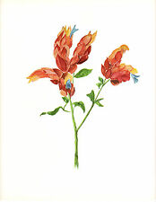 CLARENCE E HALL 1966 Book Print SHRIMP PLANT Tropical Flower Oil Painting