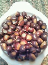 25 NUTS DUNSTAN  HYBRID Chestnut Tree Seeds Edible,Hardy Yummy 2017 DELICIOUS!!!
