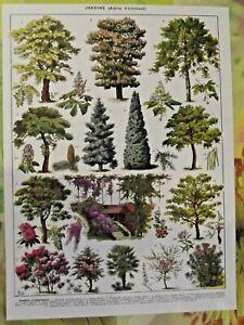 Art Print poster affichel Antique Book Page  Arbres D'ornement Robinier Aubépine