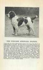 English Springer Spaniel - 1931 Vintage Dog Print - Breed Description - Matted