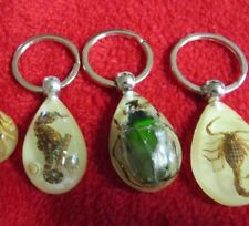 Four key chains Beetle Scarab , Scorpion ,Sea hore glow in the dark real