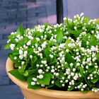 20PCS Pure White Jasmine Plant Seeds Home Garden Potted Perennial Flowers Seeds