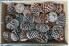 "ONE (1) LOT of 60 REAL TEXAS NATURAL PINE CONES, 3"" - 4"""